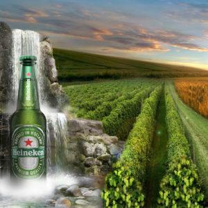 Bier - Heineken
