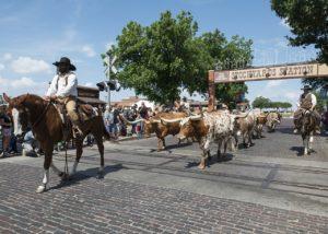 Texas ,Rinderzucht, Cowboys
